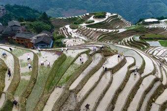 广西龙胜举办传统梳秧节