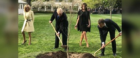 """特朗普和马克龙""""友谊之树"""",死了"""
