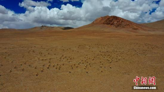 气候公报:西藏春季气温平均每10年升高0.33℃