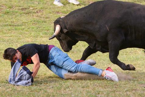 西班牙举办古老斗牛活动 小哥被蛮牛撞倒