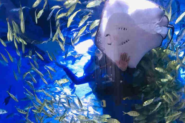 """全职养护! 兰州小伙转身另类""""男保姆""""水下服务海洋动物"""