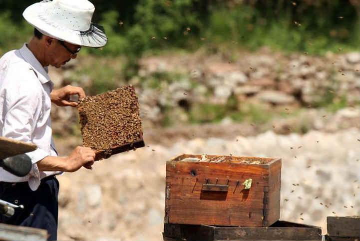 石家庄:蜂农转场井陉