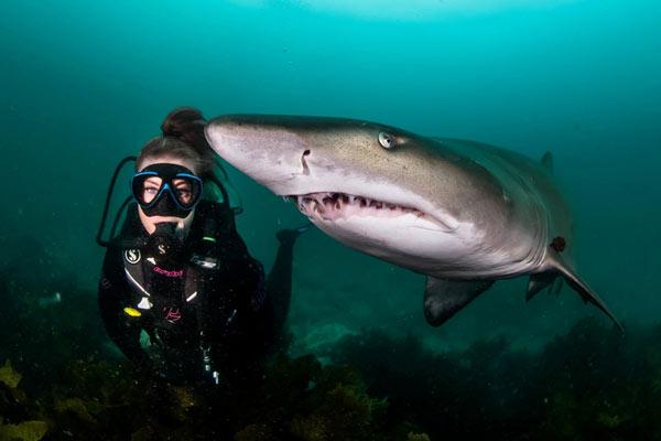 新西兰小姐姐潜入澳洲深海 与海鳗和护士鲨同游自拍