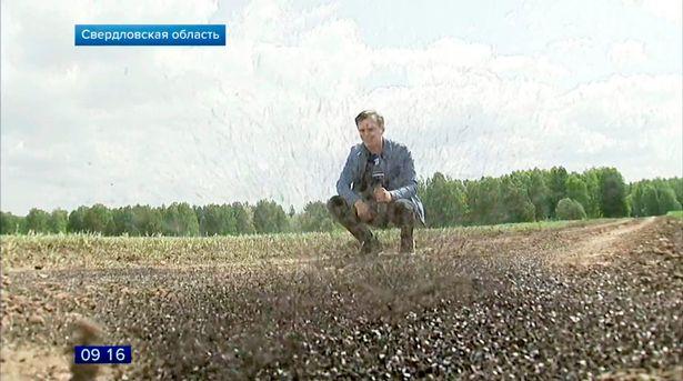 无数家蝇入侵俄罗斯小镇 居民无法外出苦不堪言