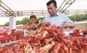 3万多食客狂扫龙虾40吨