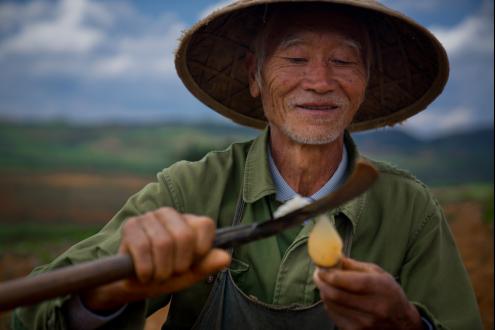 拼多多开拓扶贫新路径 贫困户共享农产品全链收益