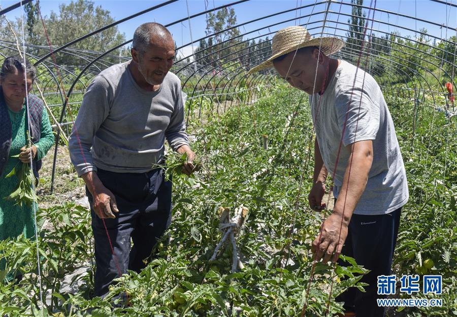 新疆:蔬菜拱棚助脱贫