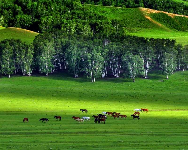 旅游季节 河北承德木兰围场强化使命担当 突出生态保护