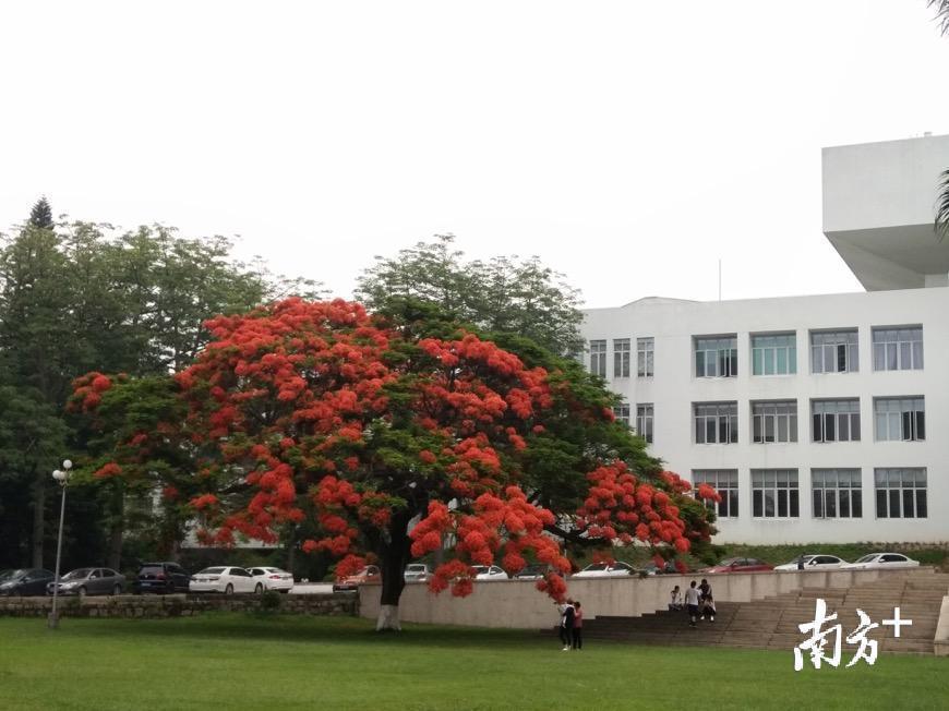 汕大校园。叶楠楠 摄