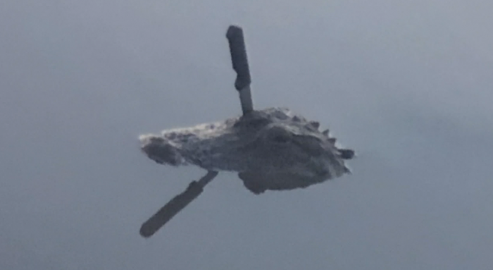 休斯顿居民观察到头上插刀却仍在游动的短吻鳄