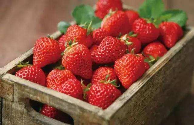 AI无人机飞一圈 就知草莓产量
