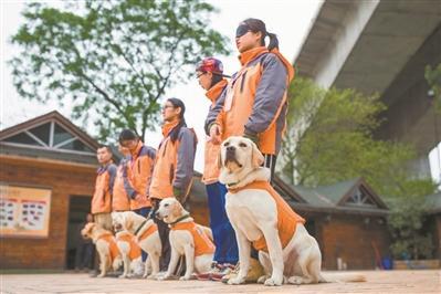 因资金不足、专业训犬师缺乏等 导盲犬供不应求