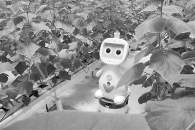 人工智能农业机器人亮相