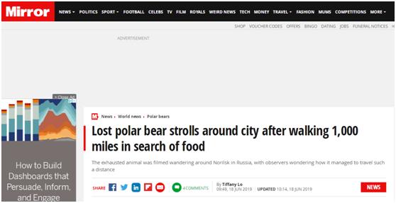 """北极熊流浪1500公里到俄城市觅食,瘦得不成""""熊""""样..."""