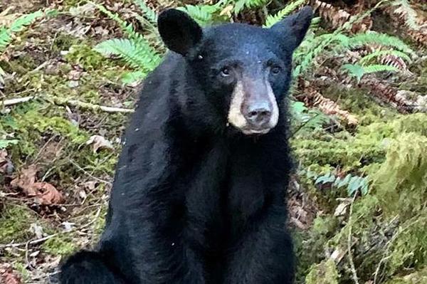 美国一友善小熊与人类亲近合影却遭管理部门枪杀