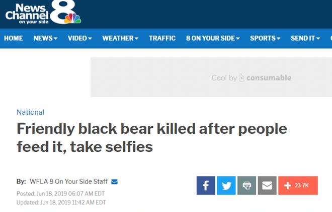"""因过于亲近人类成为""""潜在危险"""",幼年黑熊被实施安乐死"""