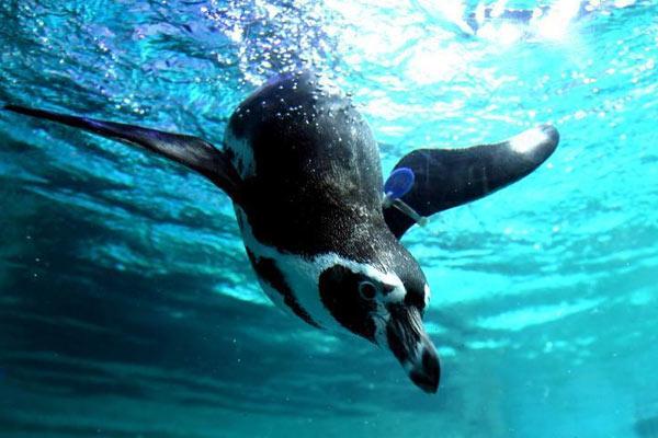 海洋动物萌态十足吸引游人