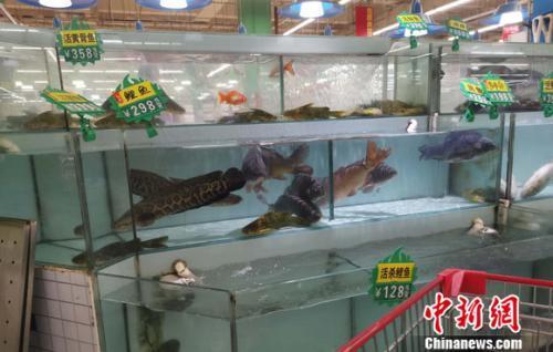 图为超市里的活鱼区。 谢艺观 摄
