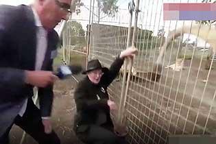 猝不及防!澳記者采訪時被獅子噴一臉尿