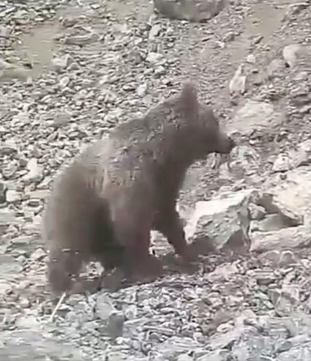 残忍!伊朗村民用石头砸死幼熊引发众怒