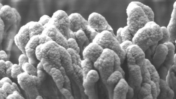 受金针菇启发 科学家研发具有更好疏水性的材料