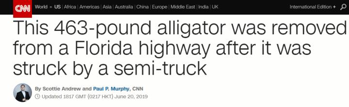 """横穿高速路被撞至重伤并安泰逝世,""""受害者""""是只463磅的短吻鳄..."""