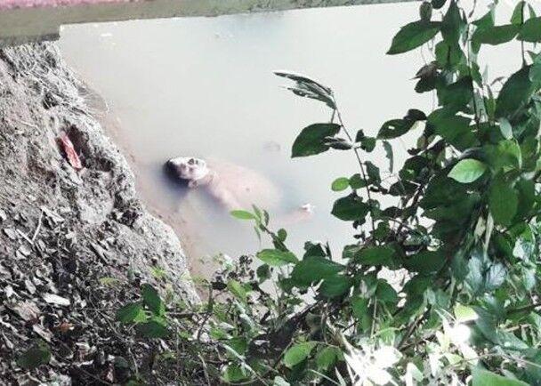 """泰国醉汉河中消暑被误当""""浮尸"""" 民众受惊报警求助"""