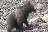 殘忍!伊朗村民用石頭砸死幼熊引發眾怒