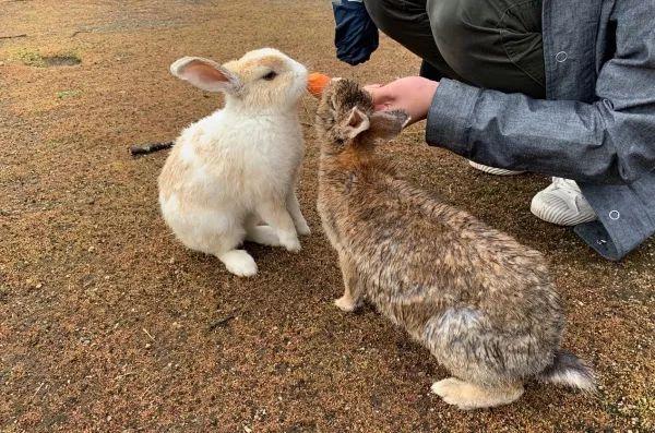 立体纸板动物兔子