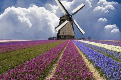 """荷兰人的""""高考创意"""":旗杆上挂书包"""