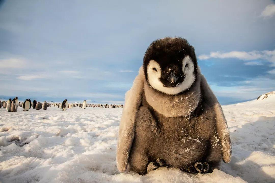 图集 | 第一次前往南极 你到底期待着什么