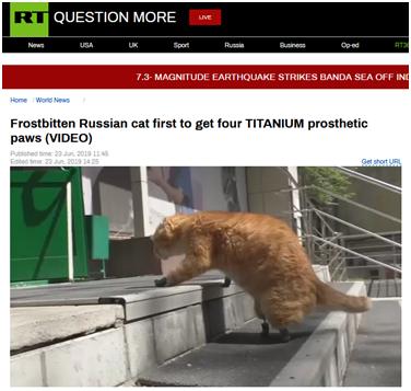 暖心!俄截肢小猫被装上4个钛制爪,网友:它现在不止九条命_中欧新闻_欧洲中文网