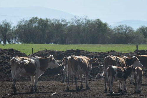 生态牧场助力牧户增收