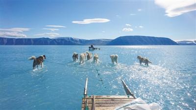 冰雪消融 格陵兰雪橇犬改趟水