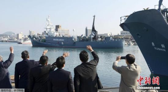 日本32年科研捕鲸史落幕 7月将重启贸易捕鲸