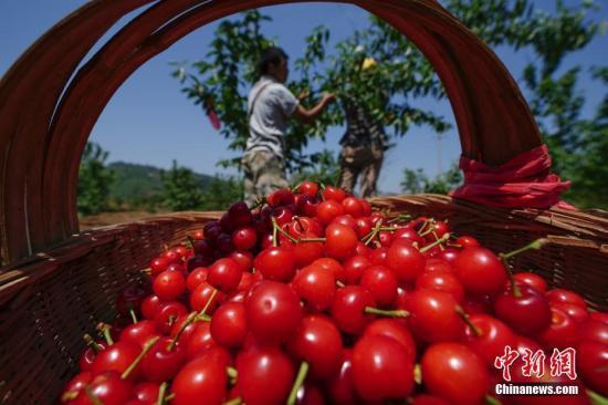 农业农村部:水果价格现回落势头 有望进入季节性下行