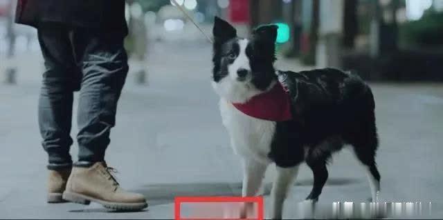 《动物管理局》:那些堪比主角的配角,还出演过这些剧