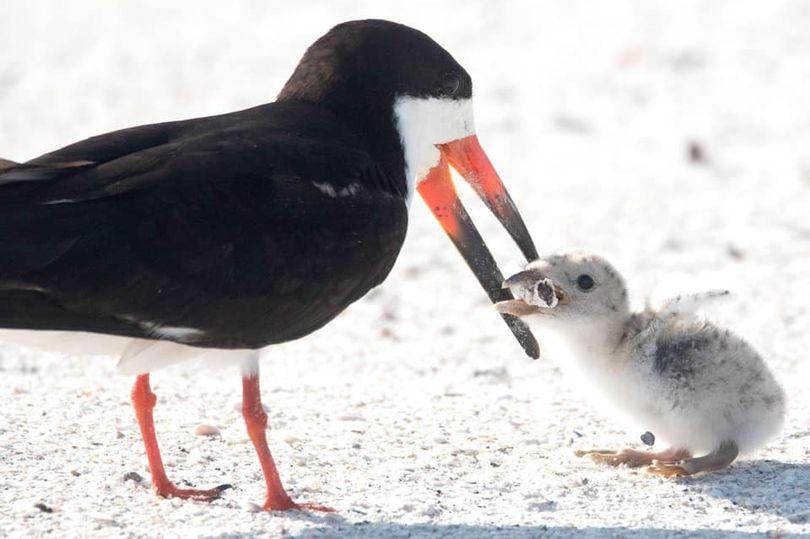 心碎一幕!美女子拍到鸟妈妈喂烟头给鸟宝宝