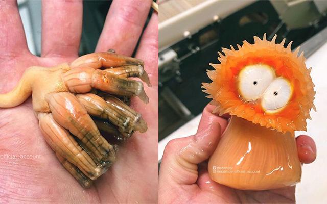 俄一渔夫网上分享捕捉到的各?#21046;?#24618;海底生物