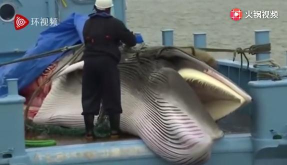 日本刚恢复捕鲸就双杀,我们想起了一部电影