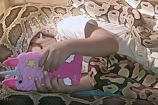 印尼三岁女童被6条蟒蛇环绕 淡定看动画片