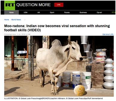 """印度""""哞拉多纳""""牛硬核球技引国家队关注,网友:前世是足球运动员"""