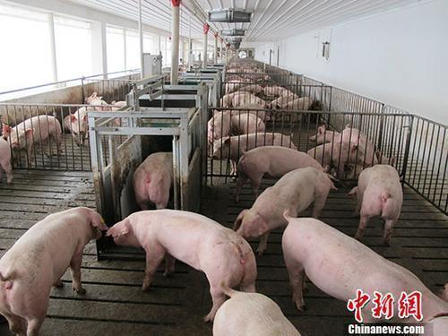农业农村部:生猪扑杀补贴政策对大小猪场一视同仁