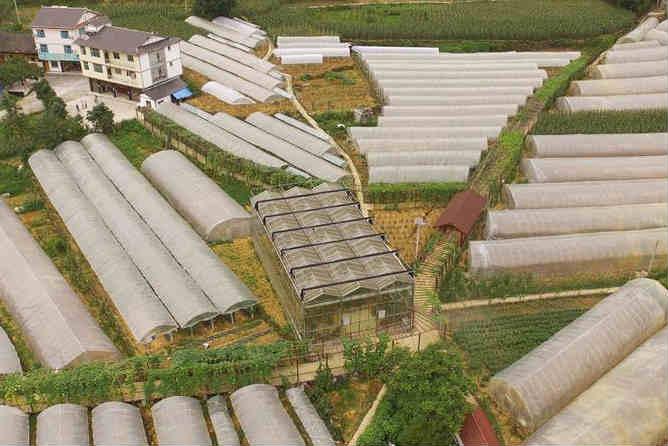返乡打工仔的农业致富路