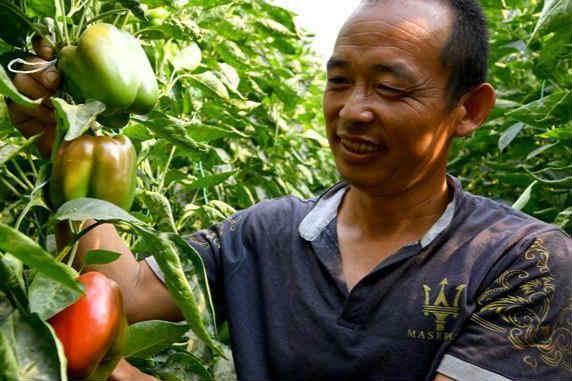山东寿光:蔬菜远销俄罗斯
