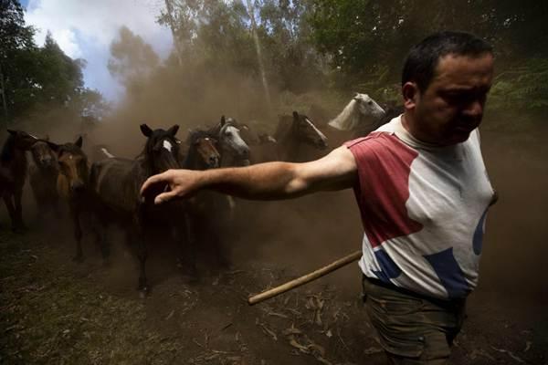 """西班牙小镇400年传统""""野马节""""举行 围捕场面惊险刺激"""