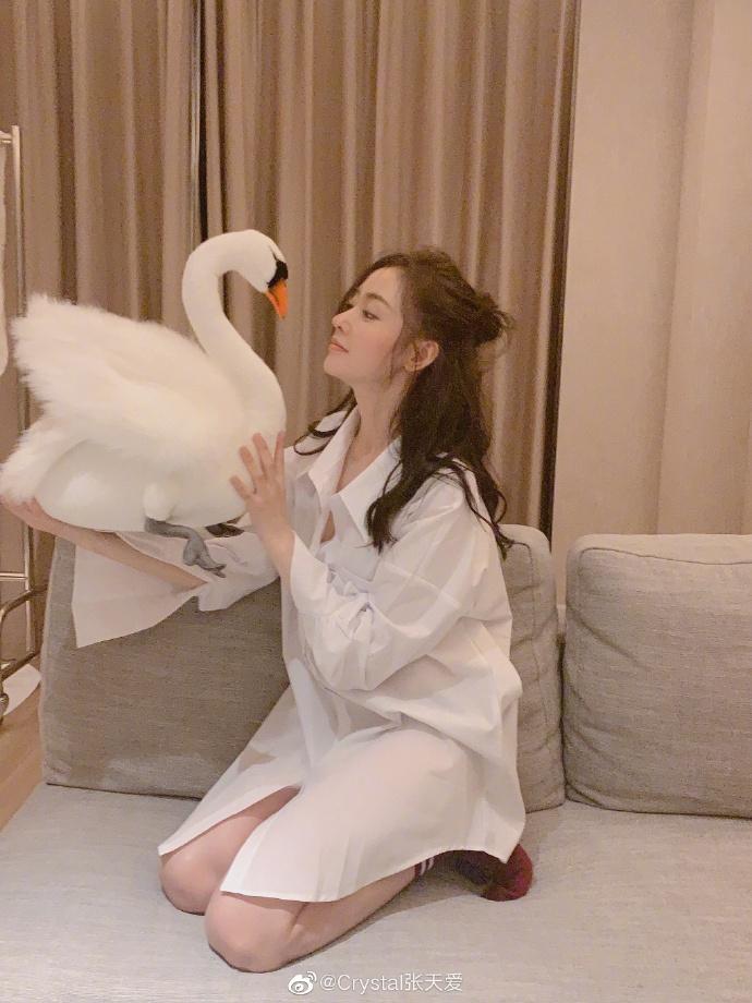 张天爱穿白衬衫下衣失踪禁欲撩人 与天鹅玩偶合影很萌趣