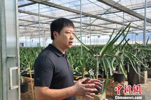 """云南砚山:""""农业+工业""""两条腿走路助力脱贫攻坚"""