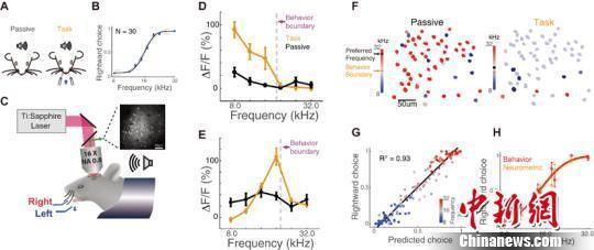 """听声音识熟人 中国科学家揭示""""大脑听觉密码"""""""