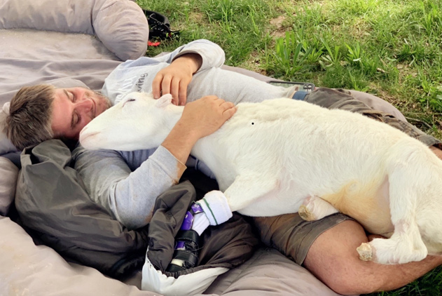 暖心!情侣收养残疾小羊 花26万为它装假肢